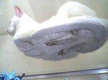 Kot na szkle