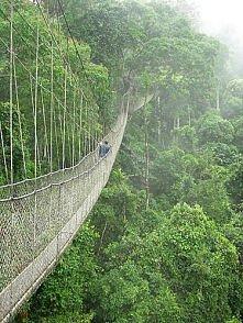 most z konopi