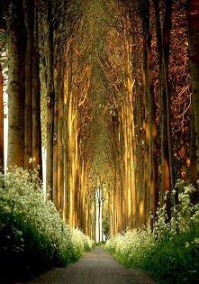 Tunel drzew, Belgia