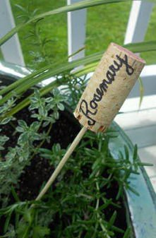 oznaczenie sadzonek