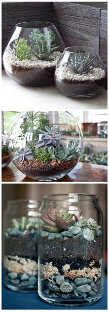 Kaktusy w szklanych naczyniach