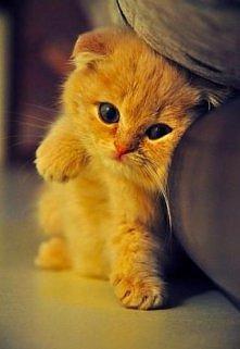 kotuś <3