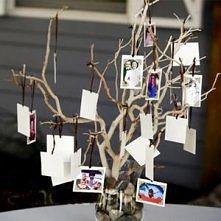 Drzewo prawie genealogiczne