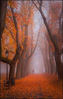 jesień, jesień...