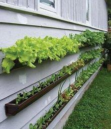 ogródek z rynien