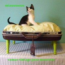 Legowisko dla kota - pół starej walizki