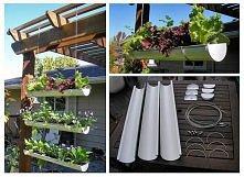 wertkalna namiastka ogrodu przy domu