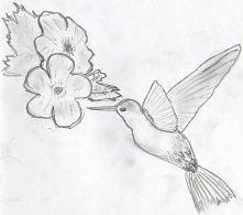 My humming bird