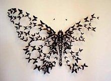 Paul Villinski- Motyle