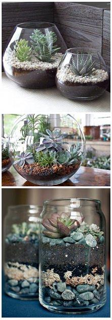 rośliny w terrarium