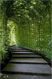 zielony tuuuuuuunel:)