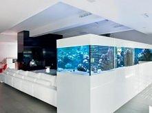 duuuże akwarium w domu