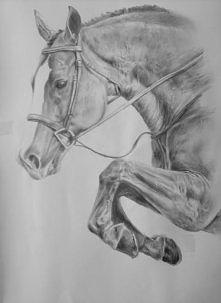 Konie są moją pasją