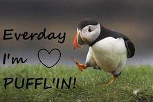Pingwin <3