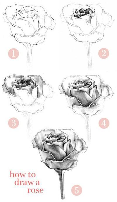 Jak narysować różę...