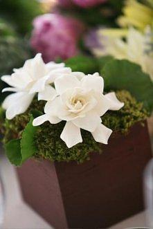 gdy w pazdzierniku kwiaty d...