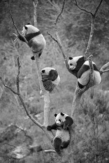 pandy ^^