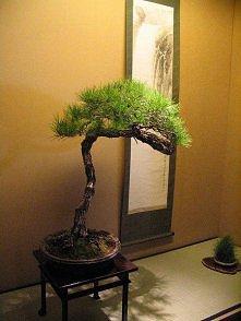 bonsai ogród zen