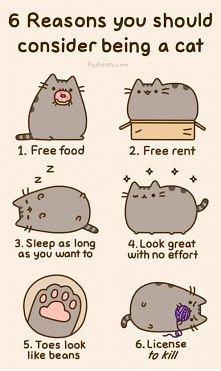 Chyba naprawdę warto byc kotem :)