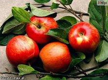 Maseczka z jabłka Zetrzyj jabłko na tarce, zmieszaj z łyżką mąki ziemniaczanej lub kukurydzianej, możesz dodać kilka kropli soku z cytryny. Rozprowadź na twarzy i szyi i zmyj po...