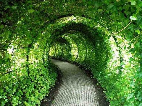 انتيكآ وجمال الورد 5003-tunel.jpg