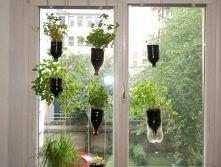okienny ogródek :)
