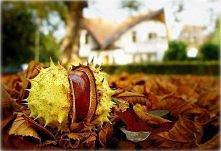 i nadeszła jesień