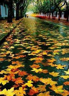 jesienna, deszczowa ulica
