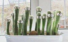 Ciekawskie kaktusy