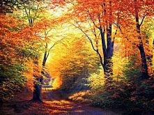 lubicie polską złotą jesień? :)