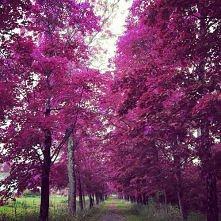 Pięknie... ;D