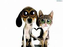 Kochajcie zwierzaki!