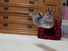 Latający królik