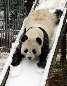 panda:D