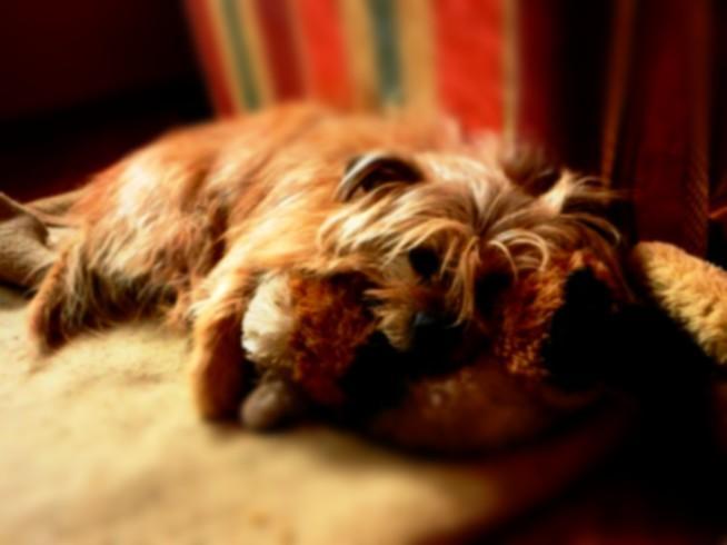 Psy zawsze będą nas kochać, choćbyśmy mieli najwięcej wad na świecie...