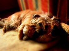 Psy zawsze będą nas kochać,...