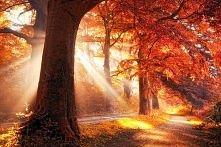 Złota jesień...