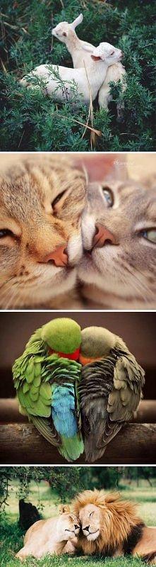 miłość? :)