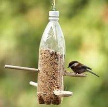 karmnik dla ptaszków