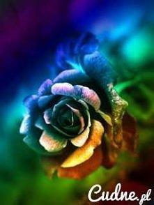 Kolory tęczy. xD.
