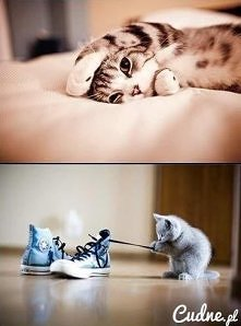Nie rób mi zdjęć - kot ;3