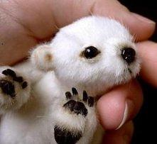 mały miś polarny ☻