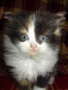Pan koteczko.:)