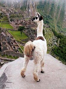 piekny widok Machu Picchu, Peru