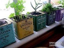 doniczki z puszek po herbacie