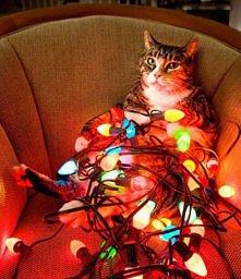kotek calkiem zmęczony przygotowaniem do świąt