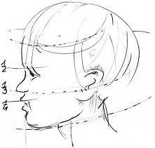 proporcje twarzy