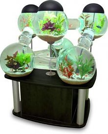 akwarium - raj dla rybek :)