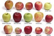odmiany jabłek :)