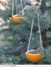 Pomarańczowe karmniki :)